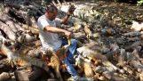 Ταΐζοντας 500 ιγκουάνα