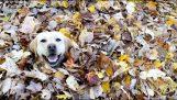 Il cane che ama le foglie d'autunno