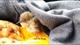 Η διάσωση ενός μικρού πουλιού