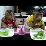 Δύο μαϊμούδες στο εστιατόριο