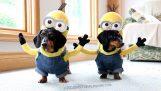 Οι σκύλοι Minions