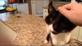 Mačka s veľmi hlbokým hlasom