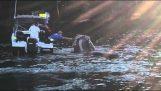 Μια φάλαινα ζητά βοήθεια από τους ψαράδες