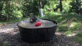 The bear makes a refreshing swim