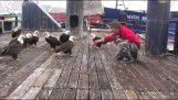 La alimentación de las águilas puntos blancos