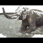 Τα ζώα διασκεδάζουν με το πρώτο χιόνι