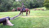 Неохоче кінь