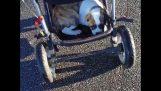 Zwei Babys in Kinderwagen