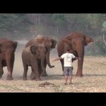 Καλώντας του ελέφαντες