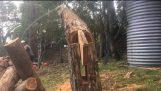Τεχνική ενός ξυλοκόπου για να κατευθύνει την πτώση ενός δέντρου