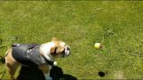 La perpetuità del gioco cane