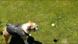 Το διηνεκές παιχνίδι του σκύλου