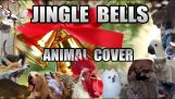 "Tiere singen die ""Trigona Kalanta"""