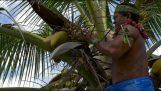 Come salire in una noce di cocco