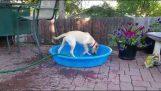 Ο σκύλος προσπαθεί να γεμίσει την πισίνα του