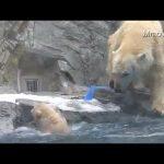 Η μαμά αρκούδα σε αποστολή διάσωσης