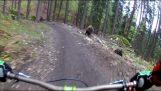 Ποδηλάτες εναντίον αρκούδας