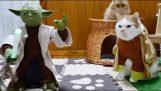 Котки обучени джедаите