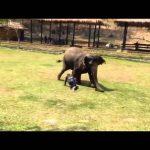 Ελέφαντας προστατεύει τον φροντιστή του