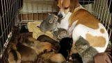 Pes přijímá tři koťata sirotek