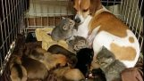 कुत्ते बिल्ली के तीन अनाथ बच्चे को गोद ले