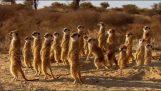 Îndoitura deșertului Kalahari