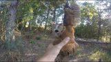 Η διάσωση μιας παγιδευμένης κουκουβάγιας