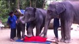 Elephants doing massage