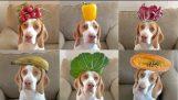 100 Meyve & Köpeğin kafasına sebze