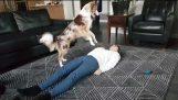 Cão faz CPR e salva seus proprietários
