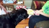 بيني يساعد على فتح الهدايا
