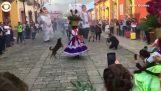Câinii care participă la un dans traditional mexican