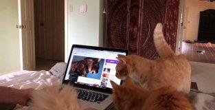 Online dátumu lokalít pre mačky