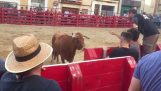 Man provokes a bull behind a barrier