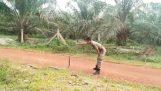 Στρατιώτης τιθασεύει μια κόμπρα