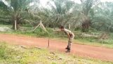 Soldier опитомява кобра