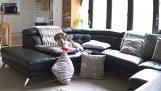 Ο γκρινιάρης σκύλος