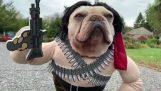 Pes oblečený Rambo