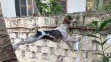 Een nieuwsgierige hond
