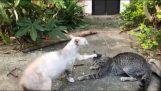 Le chat exorciste