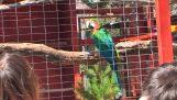 Μαθαίνοντας κακές λέξεις σε έναν παπαγάλο