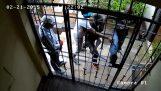 Ladrones contra una puerta enrejada