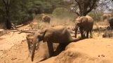 Слон показује свом малом како да сиђе