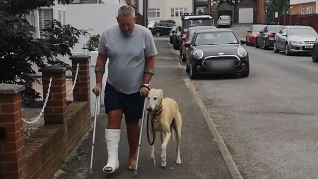 Bein gips hund gebrochen Schock für