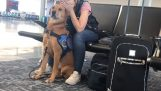 Обучено куче успокоява собственик си от пристъпи на паника