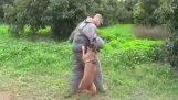 Пас телохранитељ