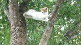 Mamma katt prøver å hjelpe sin lille