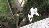 Gatto Super salto