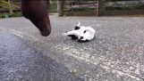 Kitten and Horse: Best of Friends